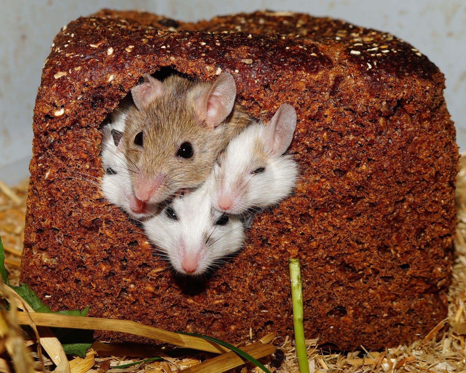 bread cute africa pets