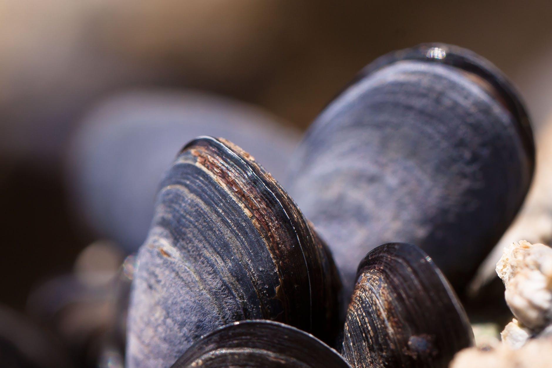 black seashell beside beige stone