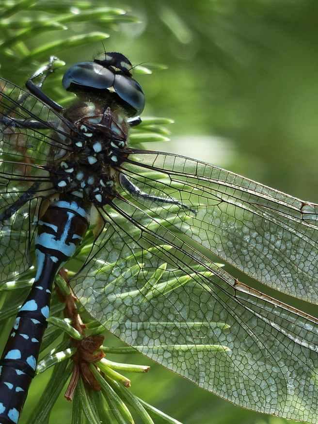 nature blue animal transparent