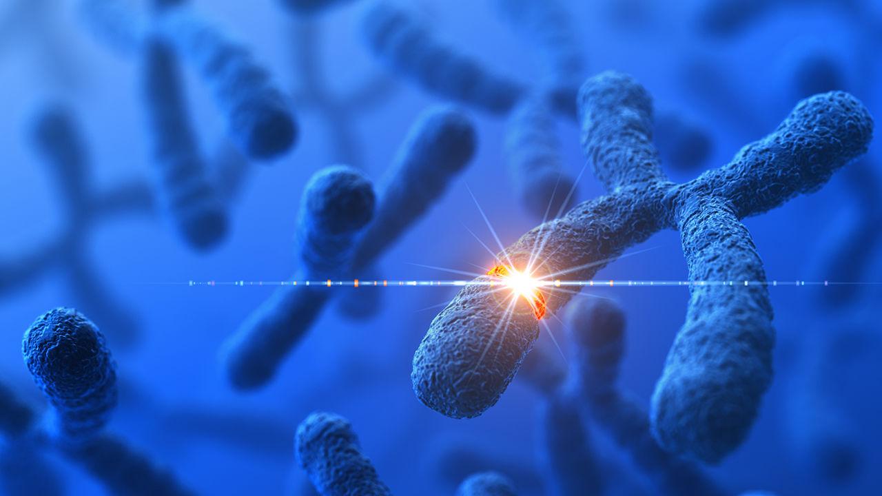Genetic Modification