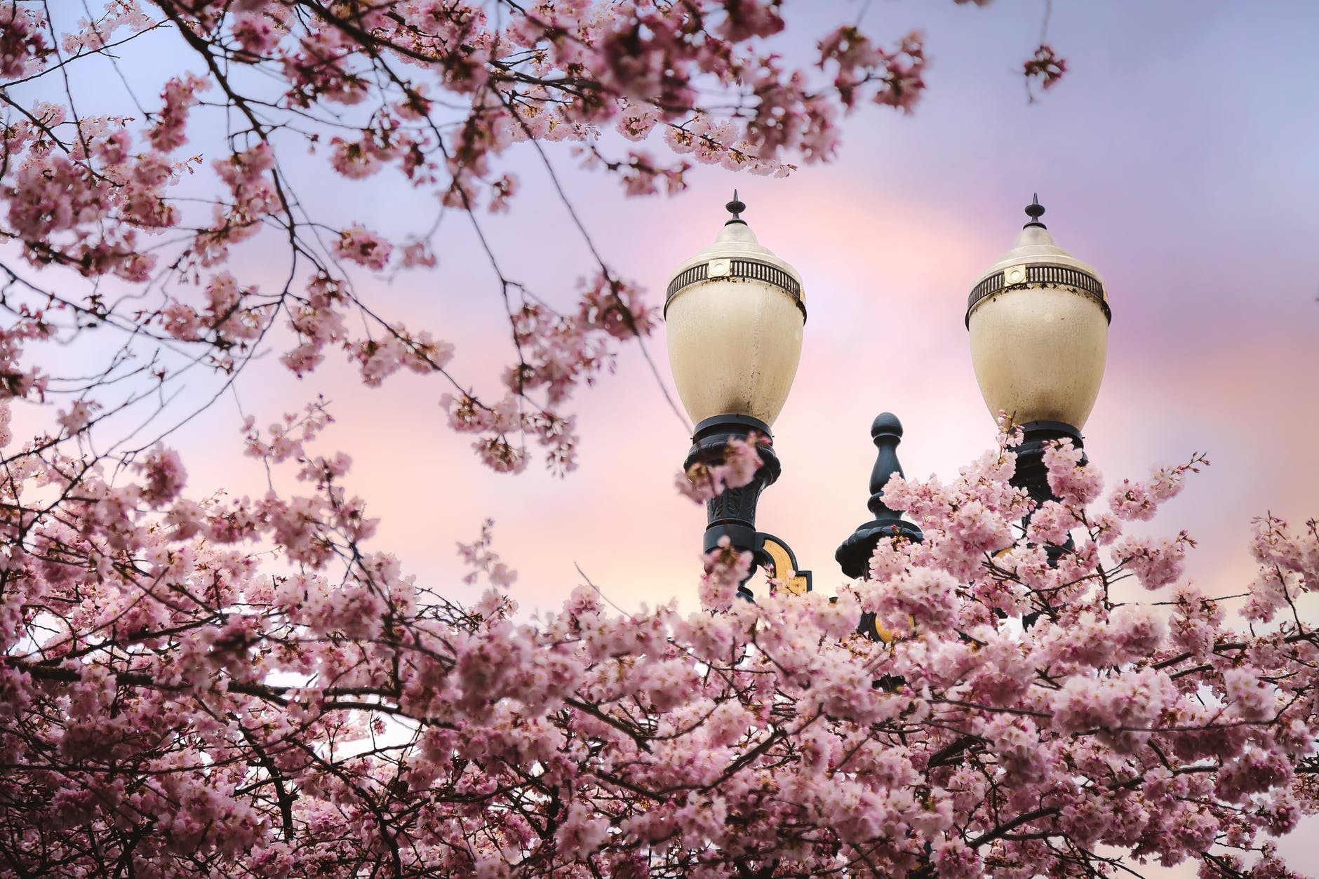 bloom blossom branch flora