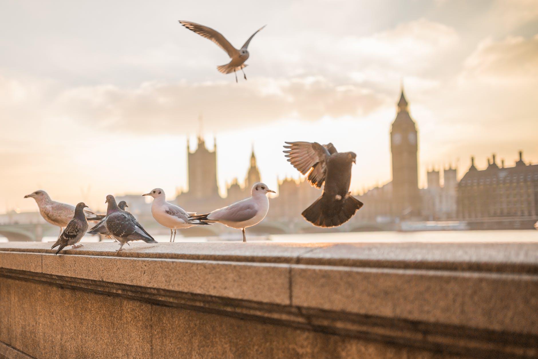 sky sunset flying birds