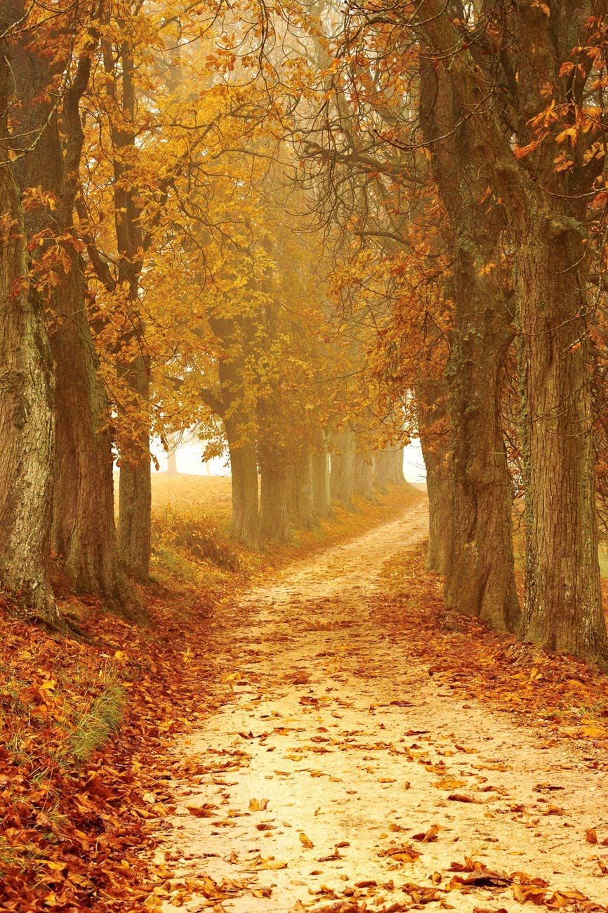 autumn autumn colours brown countryside