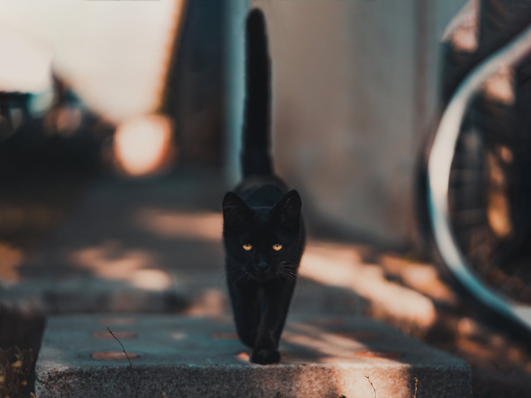 black cat walking on road