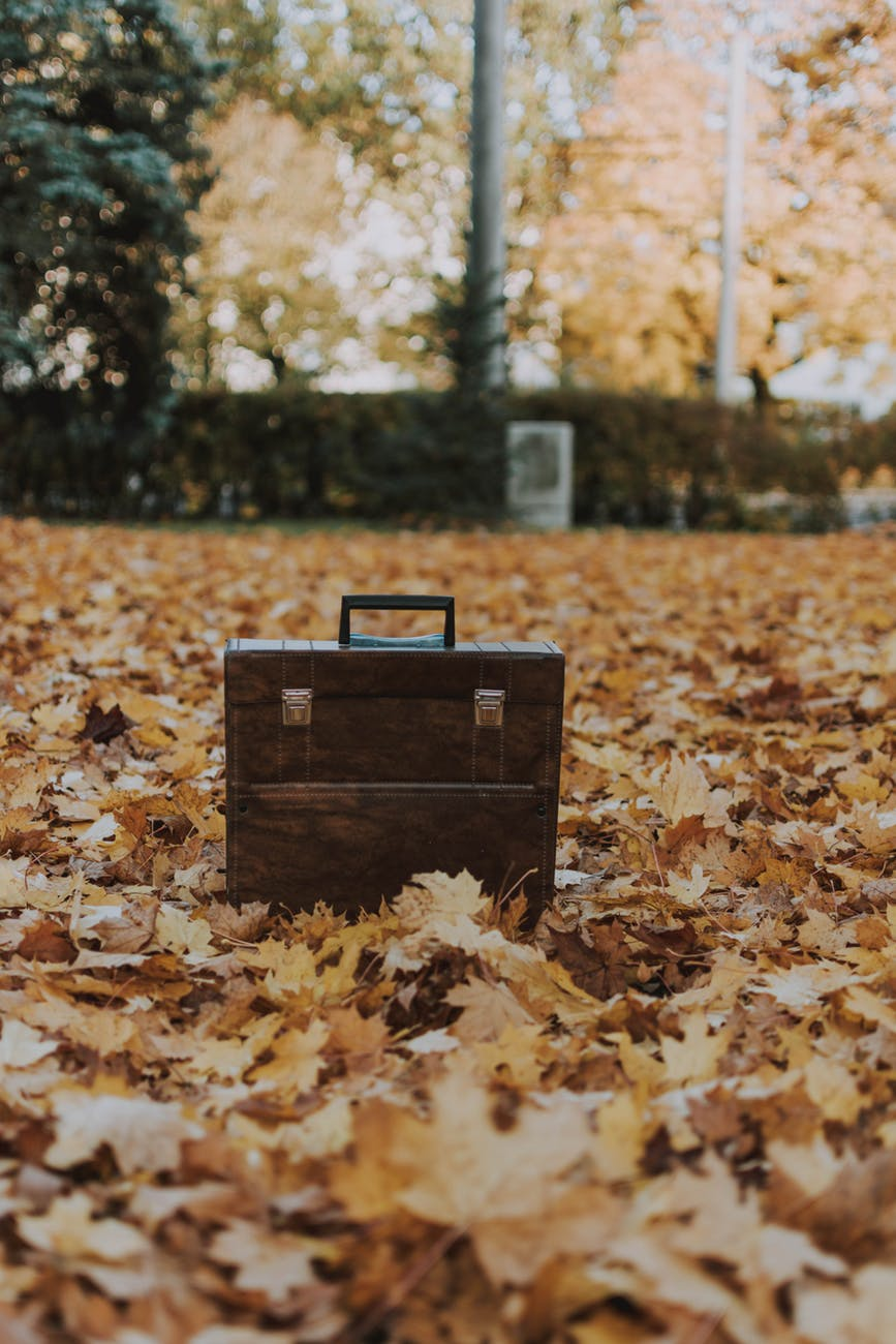 photo of suitcase on leaves
