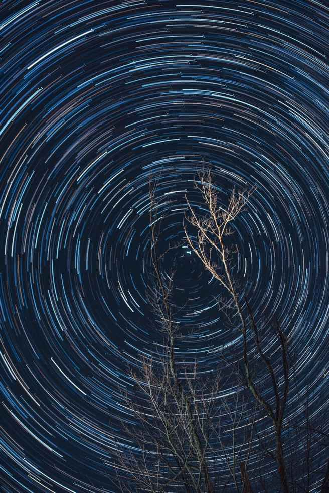 long exposure of photography of brown tree