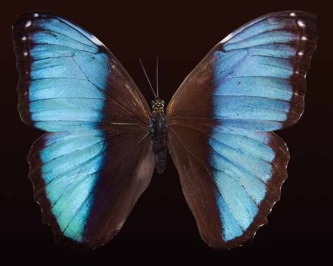 blue brown white black
